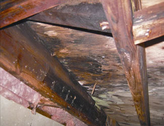 mold and rot in a Norwalk crawl space