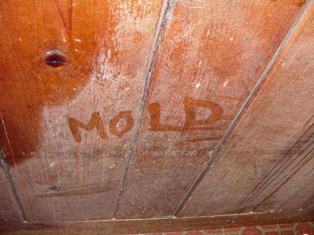 Home Mold & Dust Mite Problems in Connecticut and New York ...