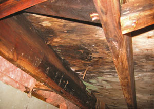 Extensive crawl space rot damage growing in Brookfield