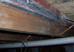 Rotting, decaying wood from mold damage in Westport